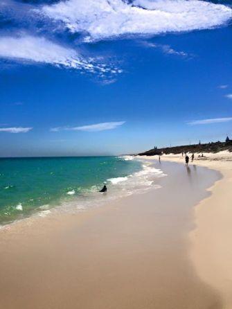 Ellen Beach